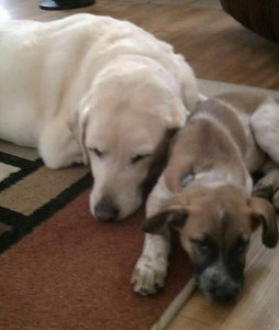 Adopted Puppy Brings Comfort To Older Dog