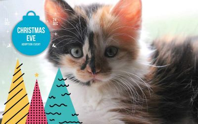 Christmas Eve Adoption Event