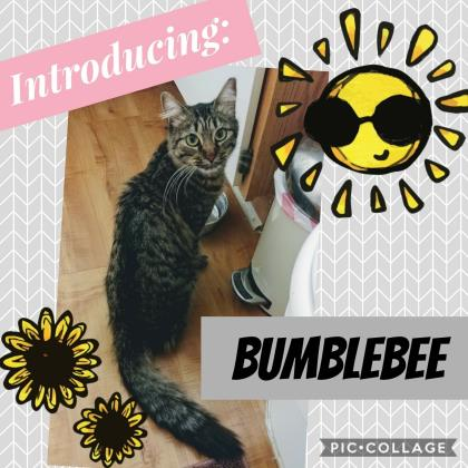 Bumblebee-2
