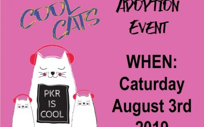 Cool Cats Adoption Event & Fundraiser